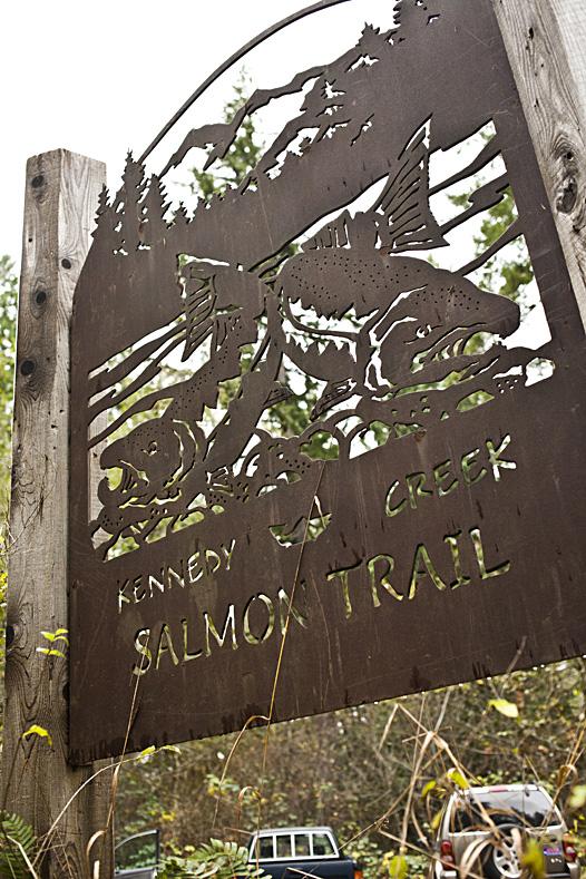 Kennedy-Creek-Salmon-Trail-111013-01